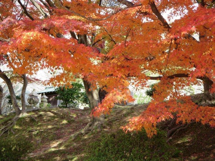 2015年紅葉便り:京都_c0051620_6251567.jpg