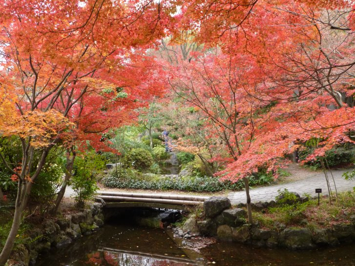2015年紅葉便り:京都_c0051620_62543100.jpg