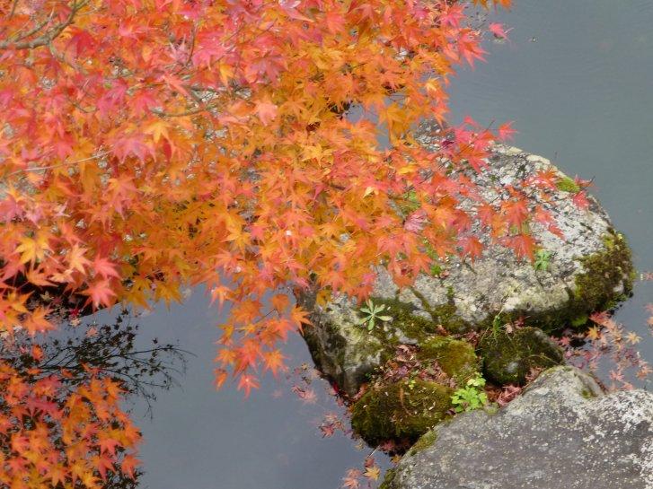 2015年紅葉便り:京都_c0051620_625564.jpg