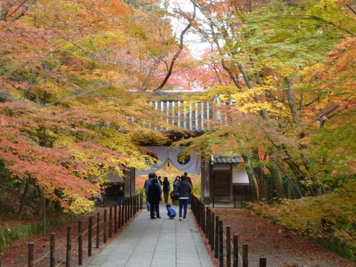 2015年紅葉便り:京都_c0051620_6262511.jpg