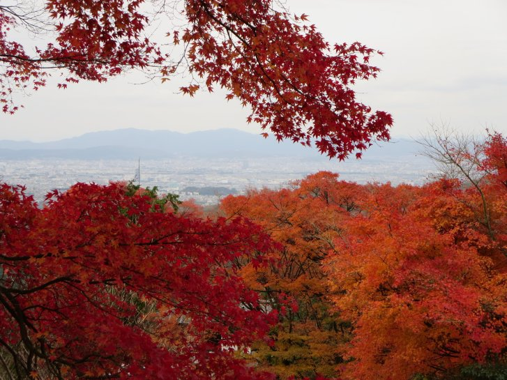 2015年紅葉便り:京都_c0051620_6263511.jpg