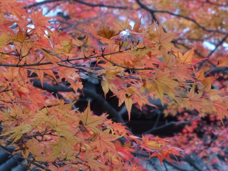 2015年紅葉便り:京都_c0051620_626467.jpg