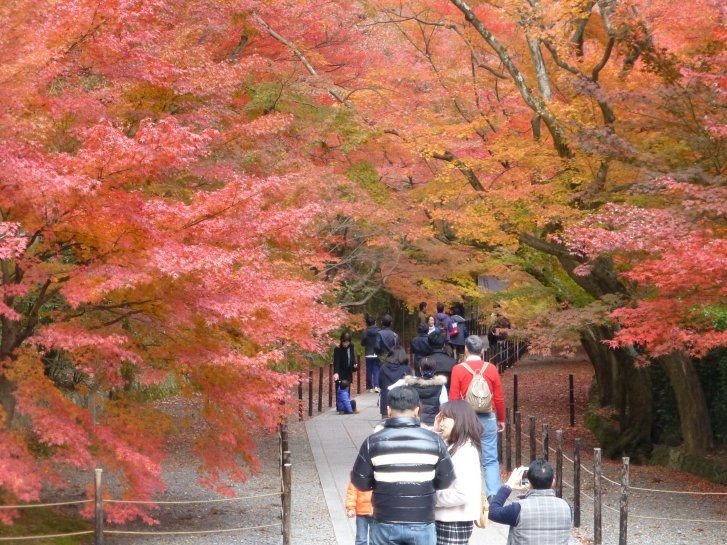 2015年紅葉便り:京都_c0051620_626512.jpg