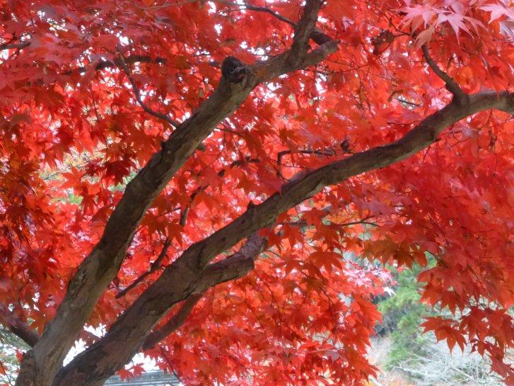 2015年紅葉便り:京都_c0051620_6271488.jpg