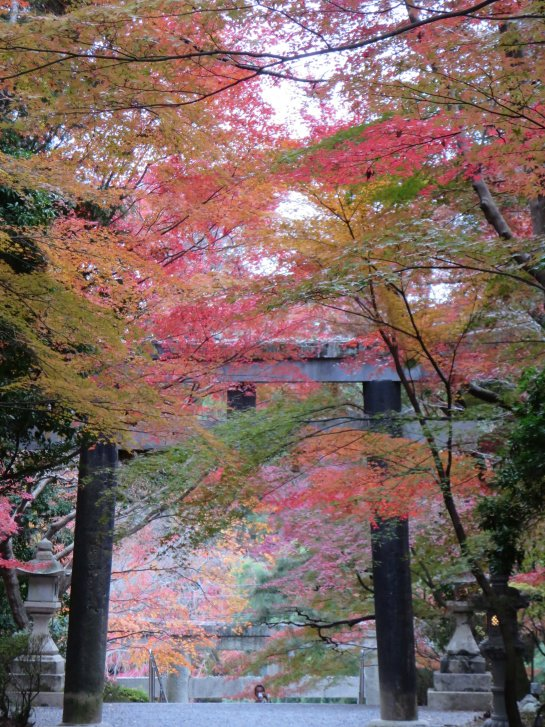 2015年紅葉便り:京都_c0051620_627520.jpg