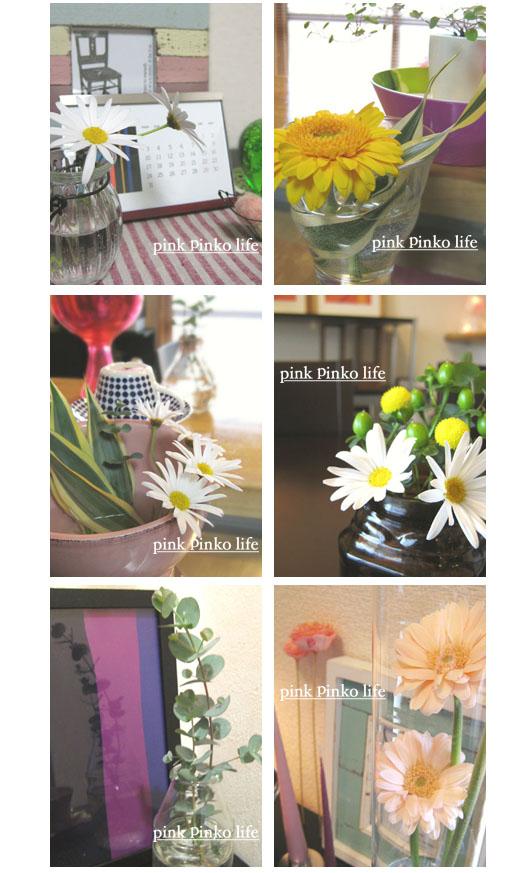 我が家はお花畑♪_d0351435_17362868.jpg