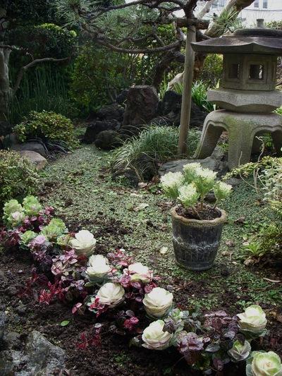 お庭。。。_a0229658_17171956.jpg