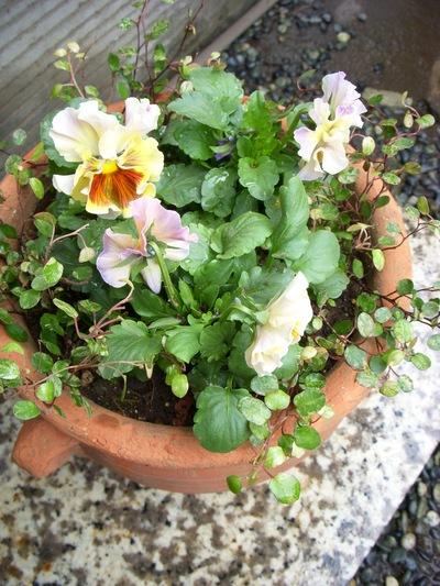 お庭。。。_a0229658_18193610.jpg