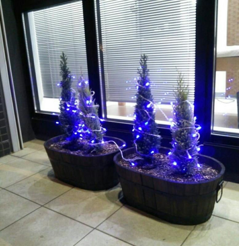 ささやかなクリスマス_e0326688_10511868.jpg