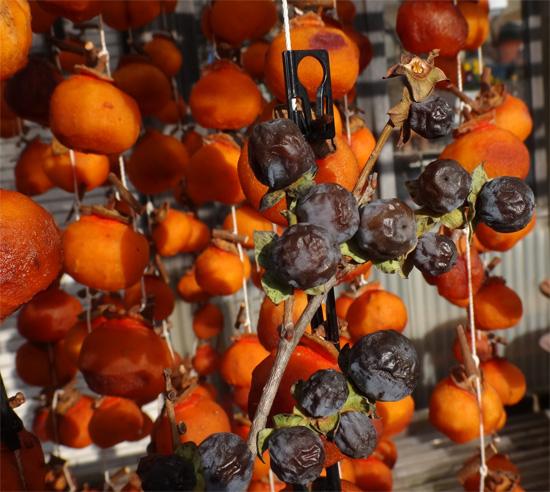 暖かい陽射しと干し柿と、ついでに豆柿(シブ)も~~♪_a0136293_16144692.jpg