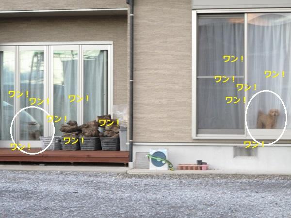 f0143123_1956381.jpg