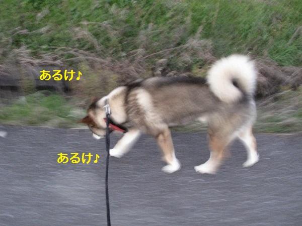 f0143123_20125572.jpg
