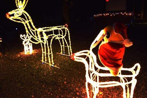 Merry ChristmasなNODA♪_c0259934_15190771.jpg