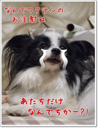 d0013149_14193880.jpg