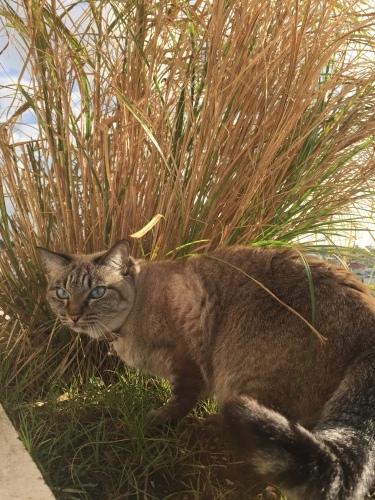 Wild cats._c0153966_22060618.jpeg
