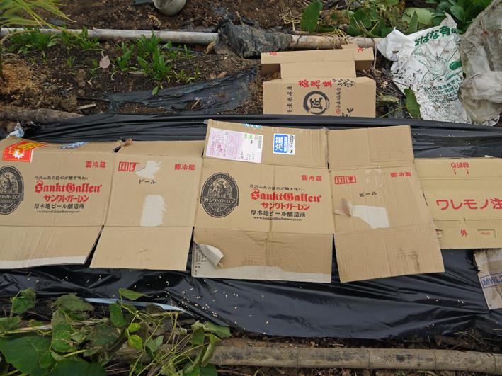 秋ジャガ全収穫、サトイモに越冬対策12・10_c0014967_19175978.jpg