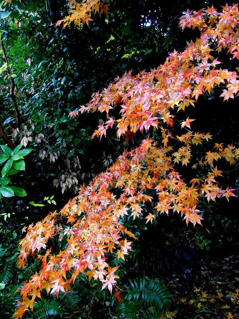 ■今年は紅葉が遅いのね。。。_f0141979_3533410.jpg