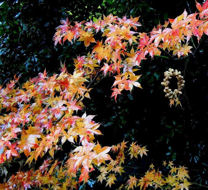 ■今年は紅葉が遅いのね。。。_f0141979_3534498.jpg