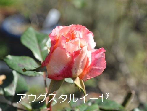 a0143388_952566.jpg