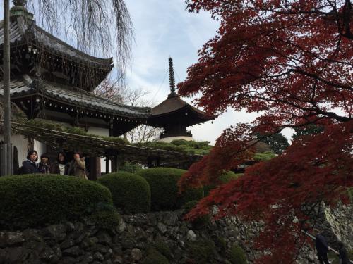 京都めぐり_c0184989_12363296.jpg