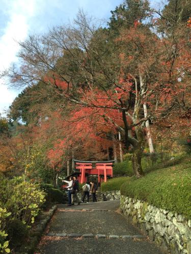京都めぐり_c0184989_12373083.jpg
