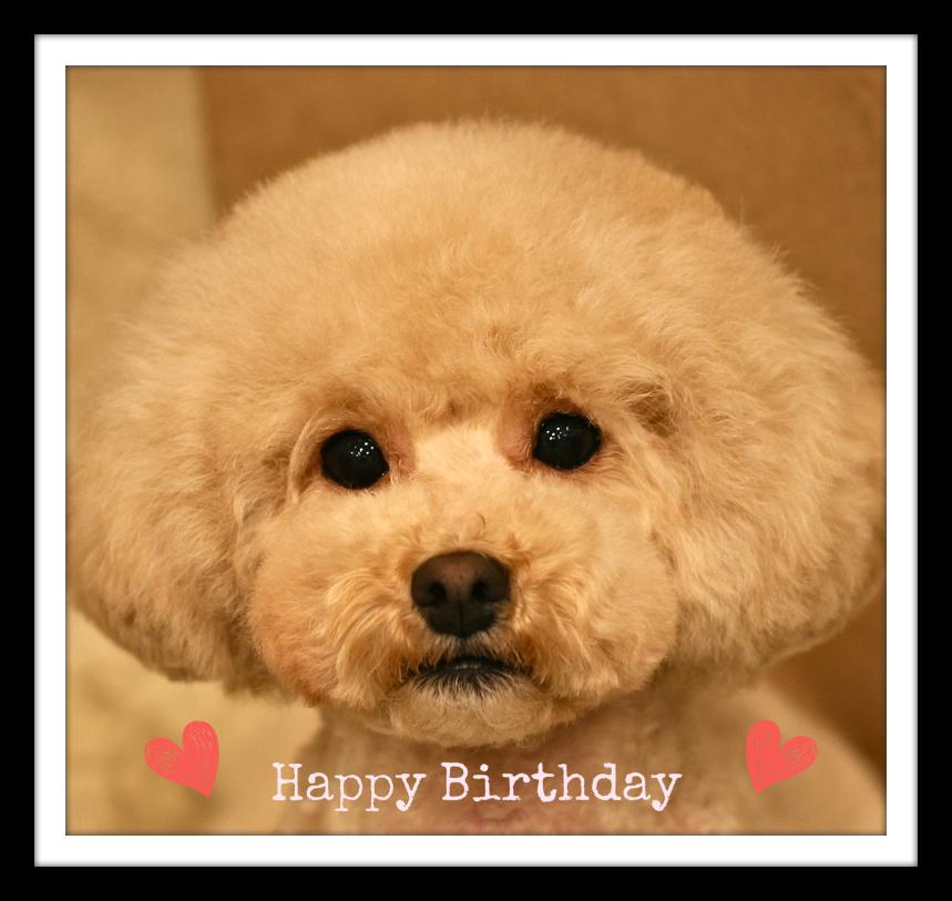 Happy Birthday♡ルナちゃん_d0060413_19144258.jpg