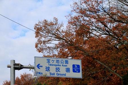 晩秋実感_e0048413_21465883.jpg