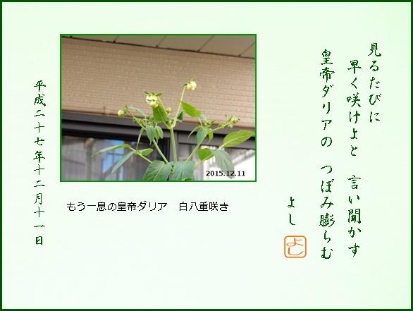 e0033229_7213580.jpg