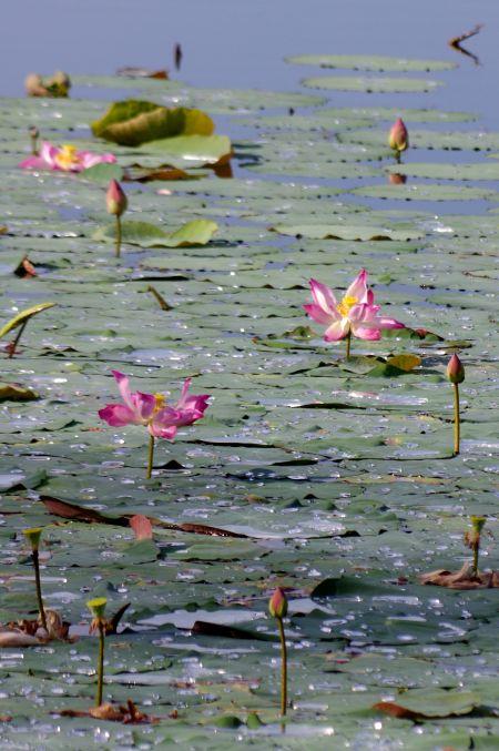 男の一人旅 ~カンボジア アンコール・ワット遺跡~_d0145934_9414667.jpg