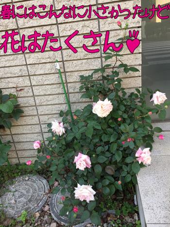 c0116550_11254257.jpg