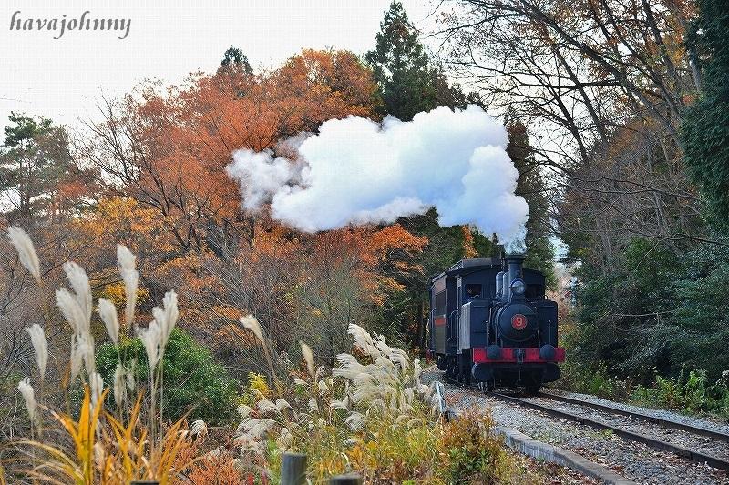 2つの蒸気機関車_c0173762_21223220.jpg