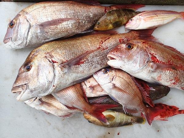 つばきマリーナの釣り大会♪_a0077071_10112843.jpg