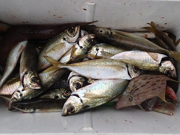 つばきマリーナの釣り大会♪_a0077071_10121097.jpg