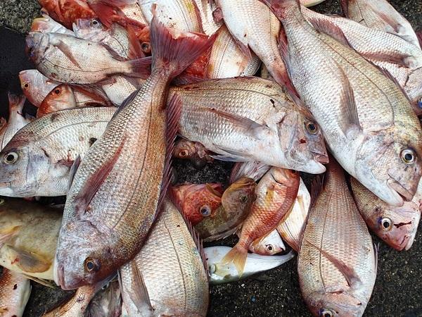 つばきマリーナの釣り大会♪_a0077071_10123712.jpg