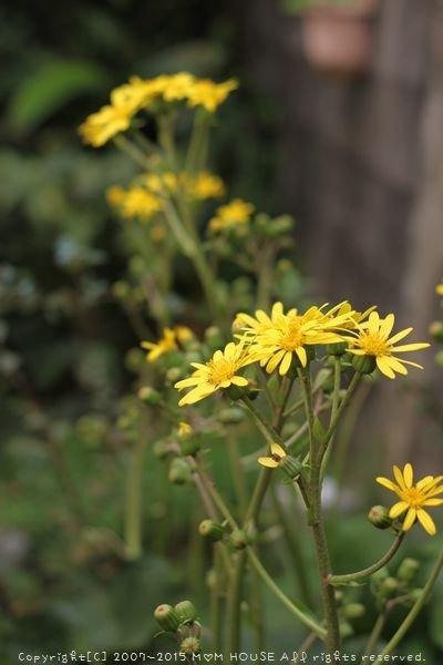 今日のブランチ と 花✿花♪_c0139375_12471814.jpg