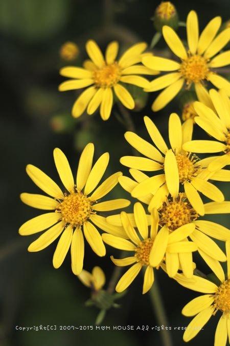 今日のブランチ と 花✿花♪_c0139375_12473467.jpg