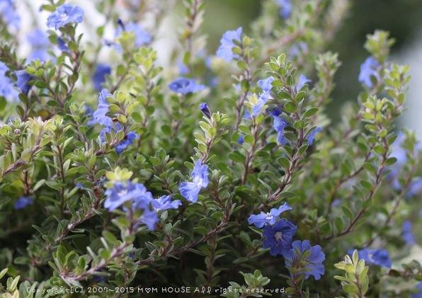 今日のブランチ と 花✿花♪_c0139375_12474131.jpg