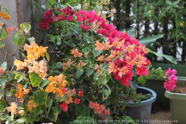 今日のブランチ と 花✿花♪_c0139375_12475135.jpg