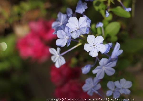 今日のブランチ と 花✿花♪_c0139375_12481087.jpg