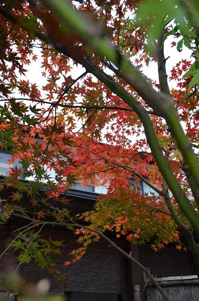 色づいた赤穂屋の紅葉 2015_d0230676_1714416.jpg