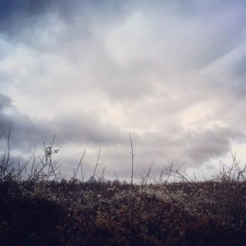 嵐が丘。_d0028589_13414373.jpg