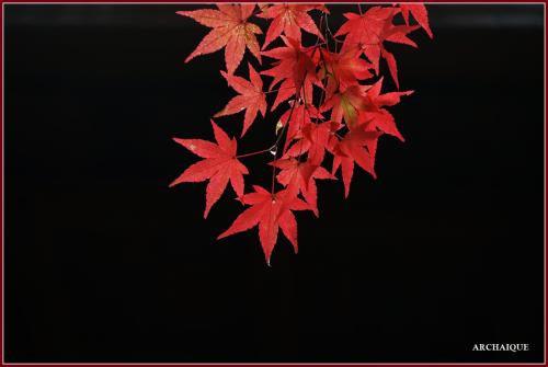 ** 今年の紅葉 2015 **_c0207890_16081283.png