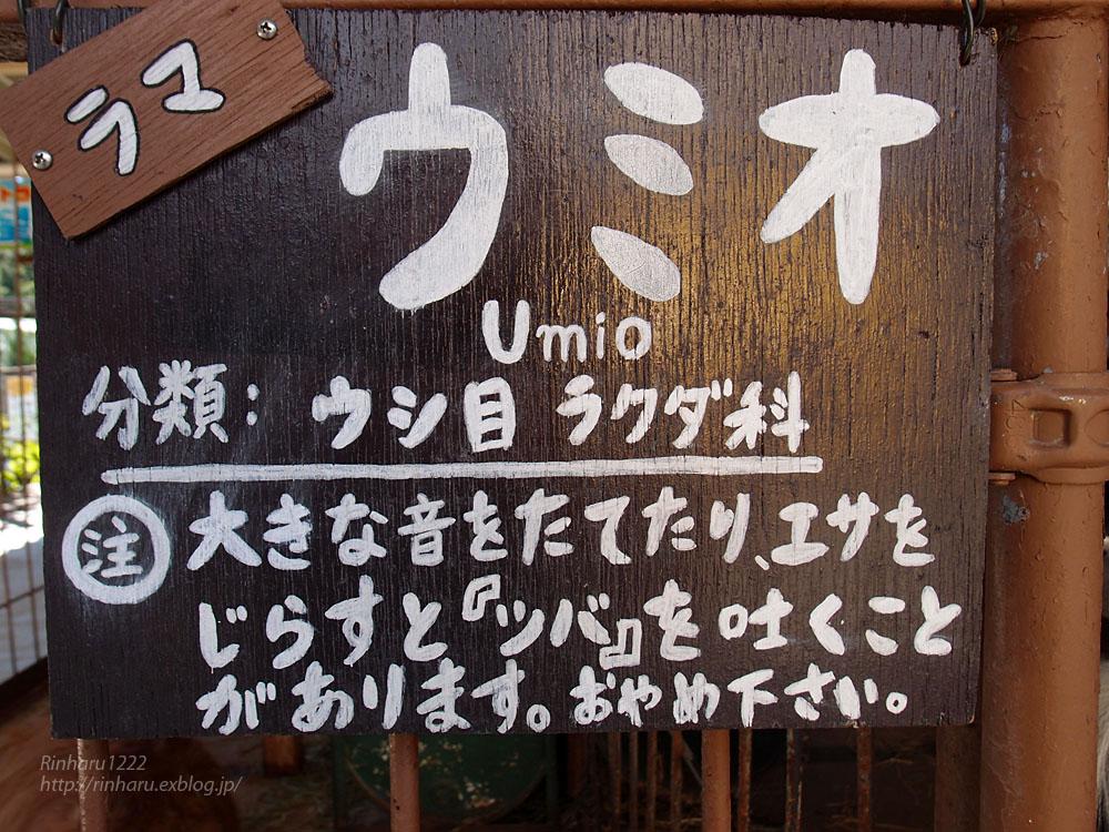 2015.9.20 那須サファリパーク☆ラマのウミオ【Rama】_f0250322_15225483.jpg