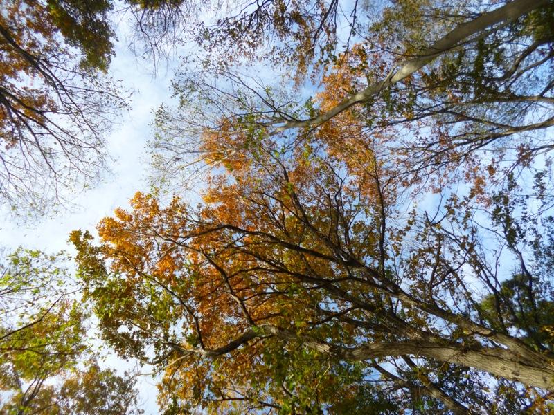 すっかり秋ですね、ってもう冬か(笑)_c0004024_12483441.jpg
