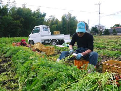 完全無農薬・無化学肥料 菊池水源里山ニンジン!朝採り即日出荷でお届けします!_a0254656_18175860.jpg