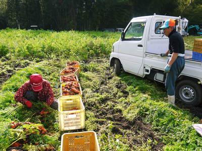 完全無農薬・無化学肥料 菊池水源里山ニンジン!朝採り即日出荷でお届けします!_a0254656_18273043.jpg