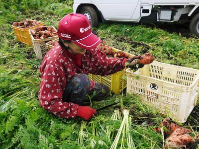 完全無農薬・無化学肥料 菊池水源里山ニンジン!朝採り即日出荷でお届けします!_a0254656_18521267.jpg