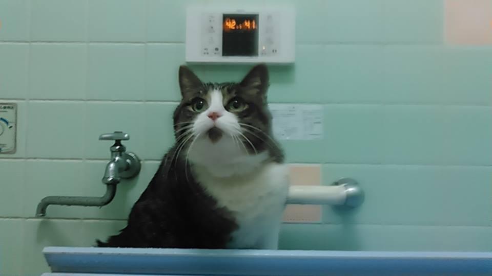 【猫】丸洗いです_f0141609_2213166.jpg