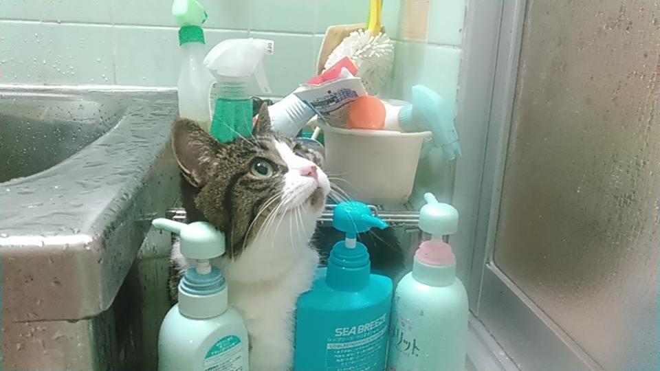 【猫】丸洗いです_f0141609_22132516.jpg