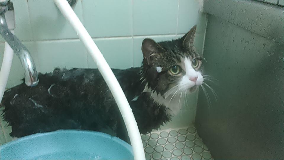 【猫】丸洗いです_f0141609_22132716.jpg